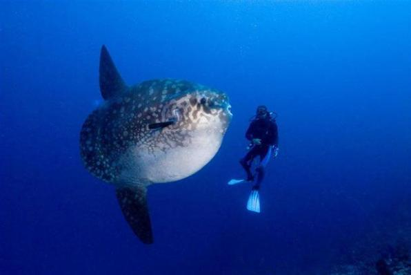 Sunfish by Kevin Deacon
