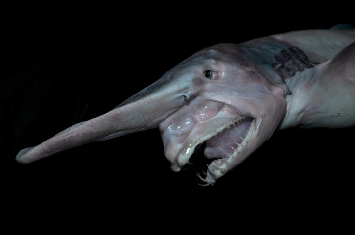 Photo: Fishes of Australia