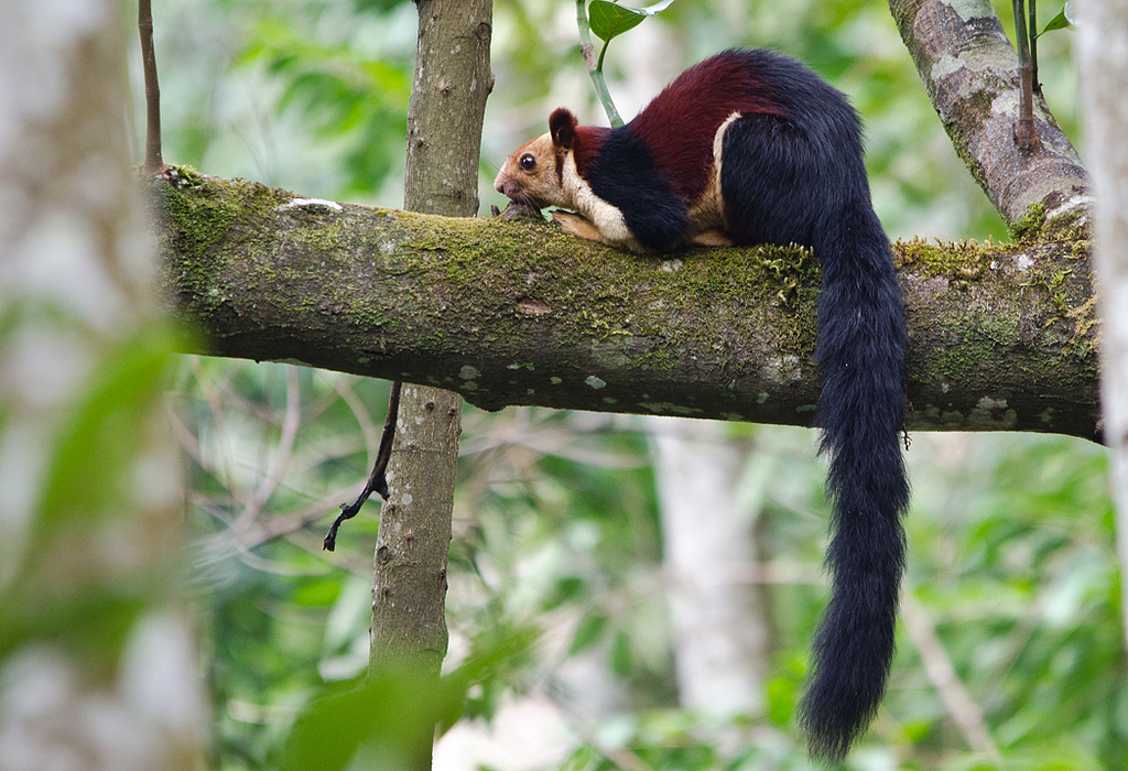 The top 10 weird mammals you should know more about!