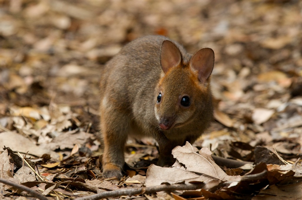not everything in australia can kill you 10 super cute non