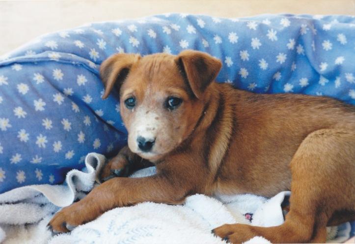 meg puppy