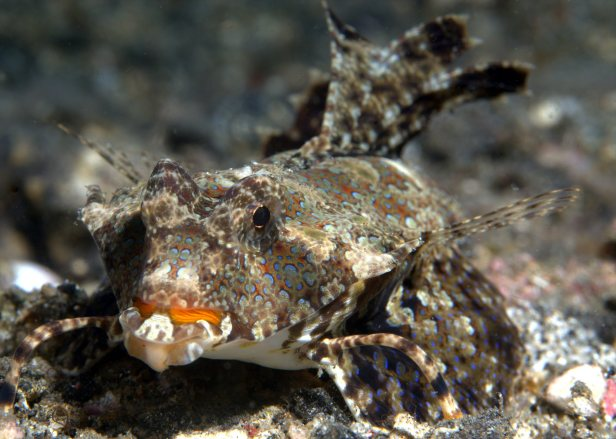 sea-moth-feet-fins-by-jack-flickr
