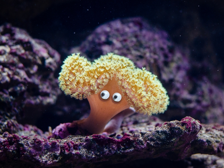 Googly corals.001
