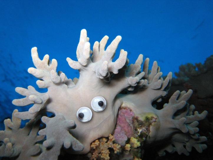 Googly corals.002
