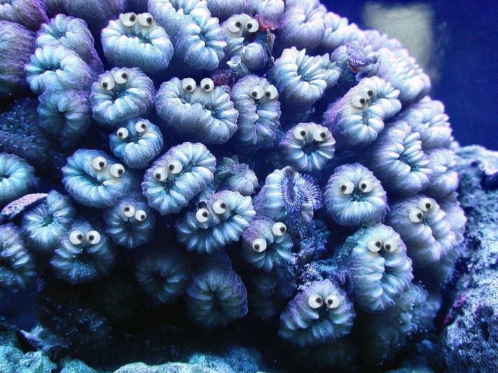 Googly corals.004