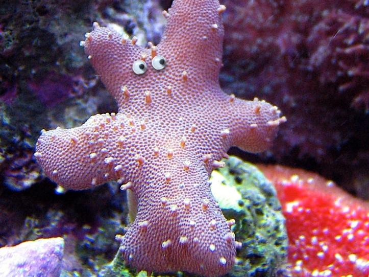 Googly corals.005