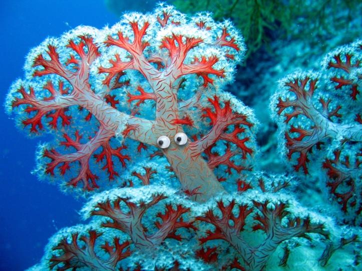 Googly corals.006
