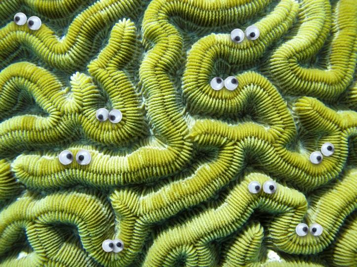 Googly corals.007