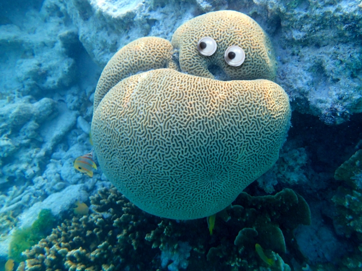 Googly corals.008