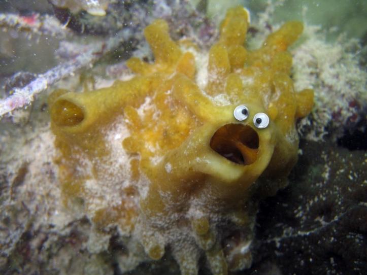 Googly corals.010